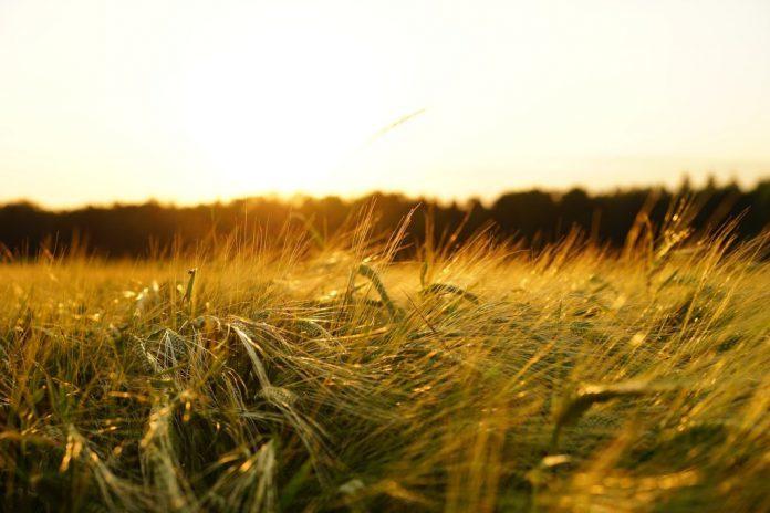 Landwirte bringen digitalen Fortschritt