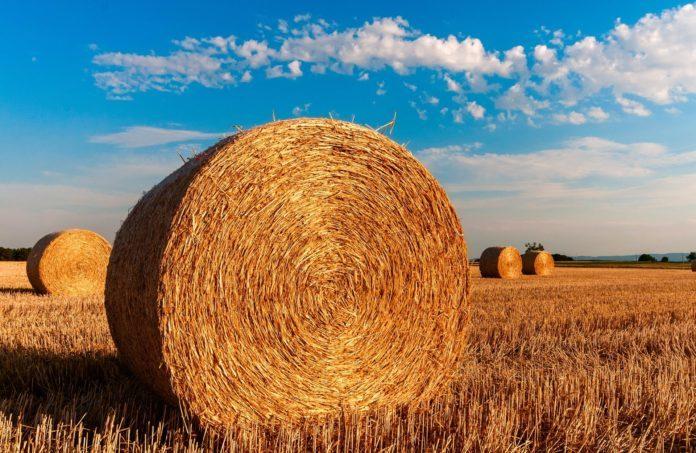 Digitalisierung der Landwirtschaft bringt Transparenz für alle